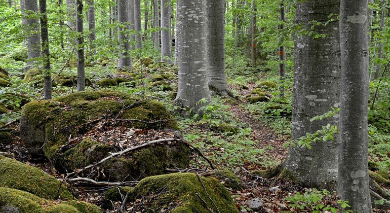 Ombergs Bokskog Naturreservat Lansstyrelsen Ostergotland