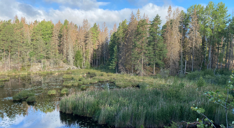 Sävö | Länsstyrelsen Södermanland