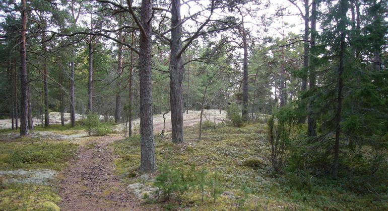 Rent A Cottage In Ljustero Stockholm Archipelago