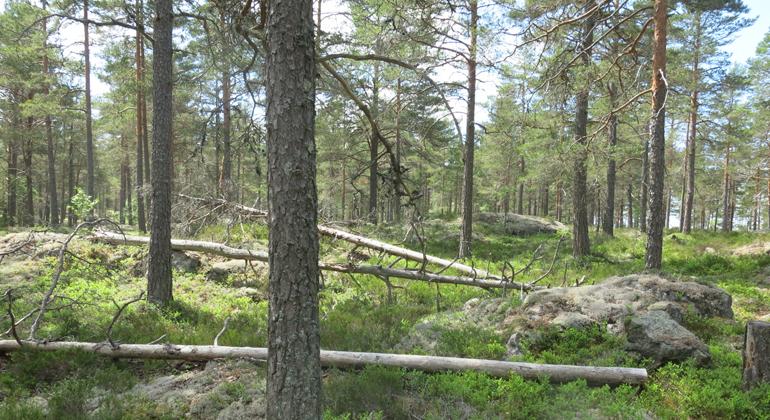 Kronskogen Stenby äng   Länsstyrelsen Södermanland