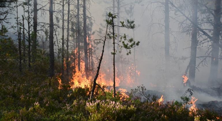 Brand i skogen. @mostphotos Larm-Soderhamn