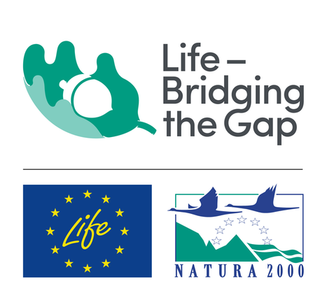 Logotype Life Bridging the gap